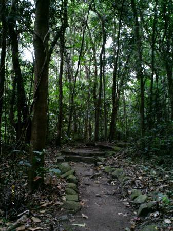 Fitzroy Island Resort: a walk through the Secret Forest behind Foxy's