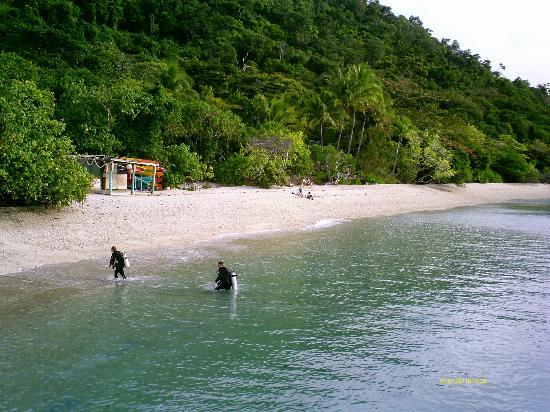 Fitzroy Island Resort : scuba divers coming ashore near Foxy's