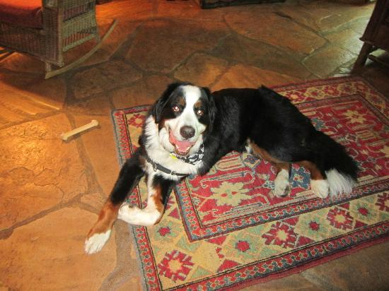 El Portal Sedona Hotel: Oliver enjoys El Portal's dog friendly ambiance!