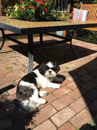 Christopher's by the Bay: Charley sunning on the patio