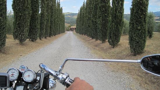 Podere del Vescovo: Zufahrt zum Landhaus-typisch toskanische Zypressenallee