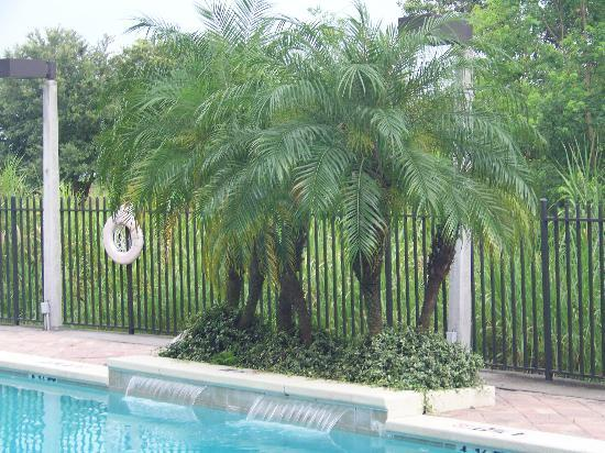 Holiday Inn Express Hotel & Suites - Veteran's Expressway: Palms by the pool!!!