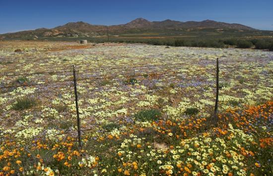 Namaqualand: Kamiesberge