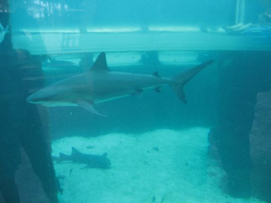 Atlantis - Harborside Resort: Leap of Faith Shark Tank!