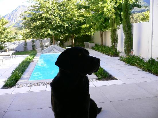Maison d'Ail Guest House: Clive's faithful dog