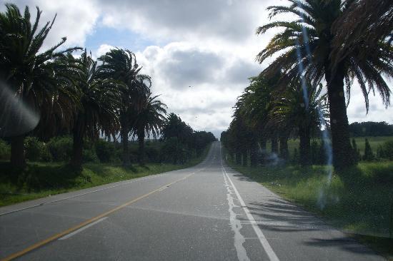 Granja Colonia: Camino de Colonia a Granja Arenas