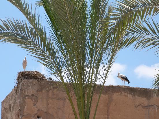 Riad Charme d'Orient: les cigognes