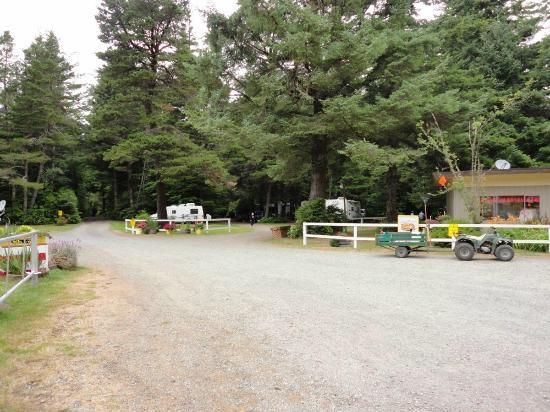 Bandon/Port Orford KOA: Treed sites!