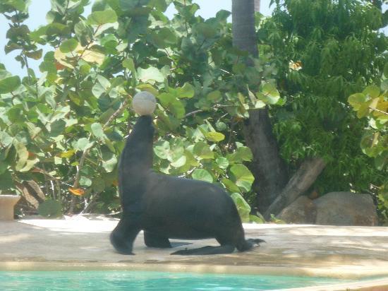 Punta Cana, Dominikanische Republik: Lovo marino