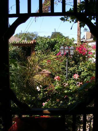 A White Jasmine Inn : Beautiful landscaping in the back yard.