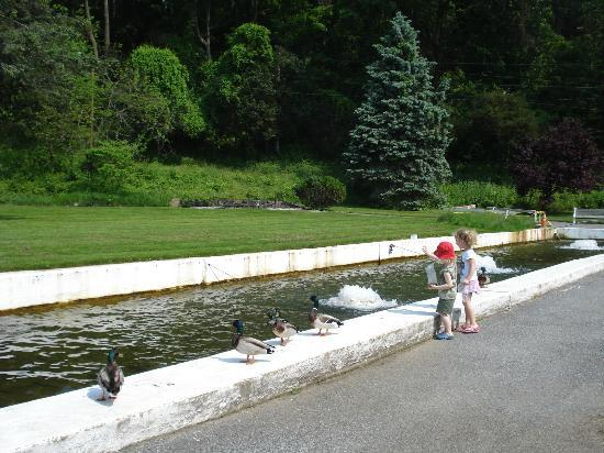 Allentown Fish Hatchery: Fish Hatchery