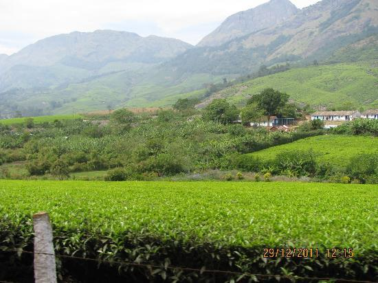 Mountain Club Resort: Way to munnar