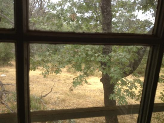 Pine Hills Lodge: Looking out the back window