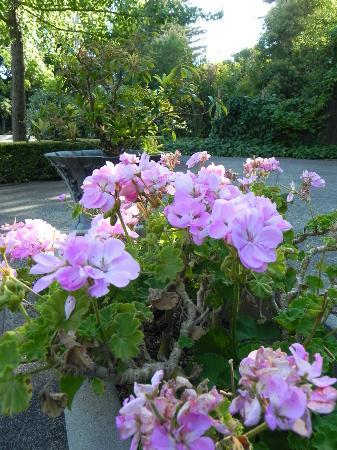 Calderwood Inn: Flowers in full summer bloom