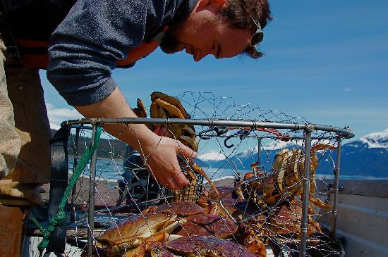 Haines, AK: Crab for Supper - Photo by Andy Hedden