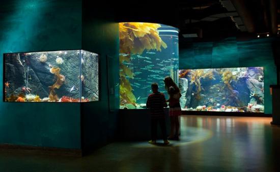 Shaw Centre for the Salish Sea: The Salish Sea Gallery