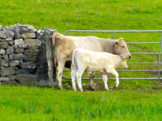 Cahergal Farmhouse: Loved the animals