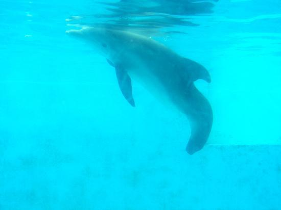 The Real Story Gow Winter Lost Her Tail Picture Of Clearwater Marine Aquarium Clearwater
