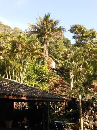 Casa Bonita: Garden