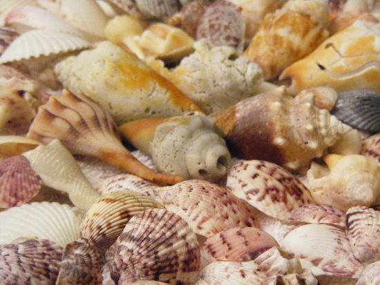Seaside Inn: some of our shells we found!