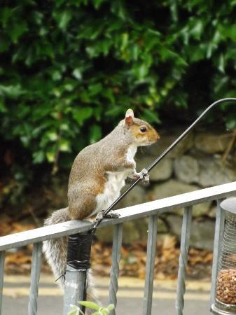 New Hall Bank: Cheeky Resident Squirrel