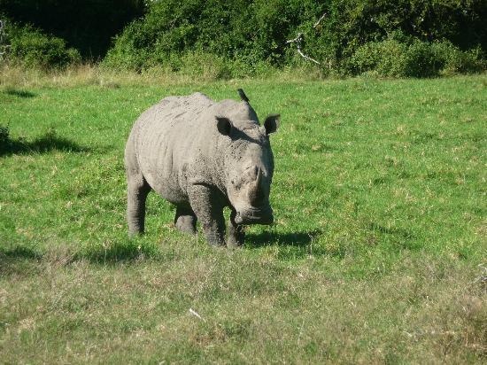 Sibuya Game Reserve & Tented Camp: Safari
