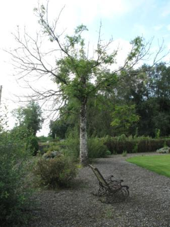 Innisfree B&B: Garden