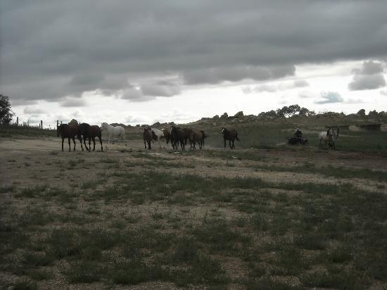 Klondike Ranch: Horses coming in from the pasture