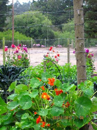 Glendeven Inn Mendocino: garden