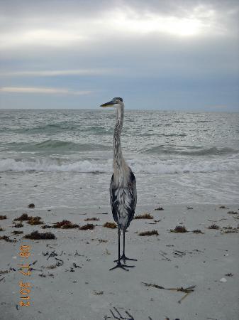 Gulf Surf Motel: motel mascot