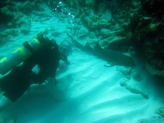 Dolphin Dive: Mr Nurse Shark and I