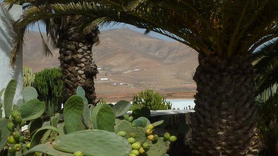 Centro de Artesania Molino de Antigua: View through the cactus
