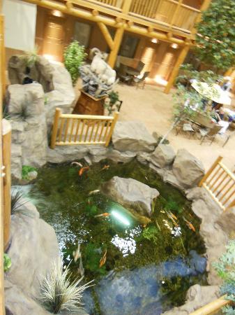 C'mon Inn Hotel & Suites: Koi pond