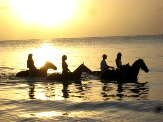 Being with Horses: SUNSET experience