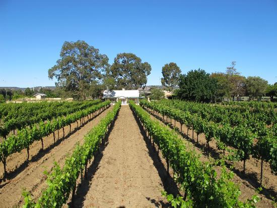 Harris Organic Wines