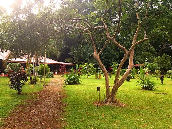 Hotel Canto de Ballenas: vista del jardin y la recepción