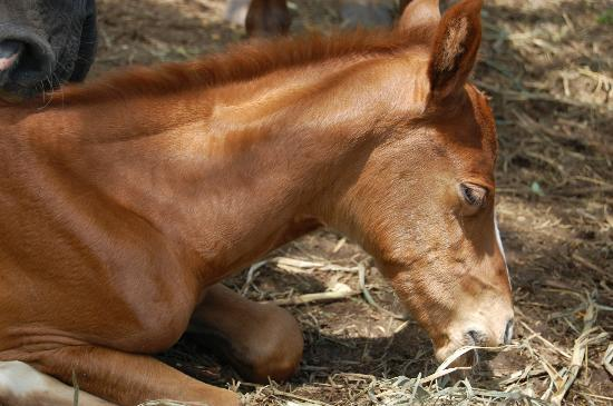 Being with Horses: Princess JUlIE´ 2 days young