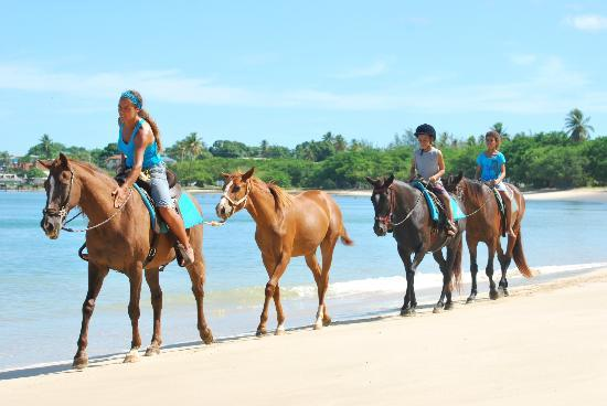 Being with Horses: stolling along the BEACH