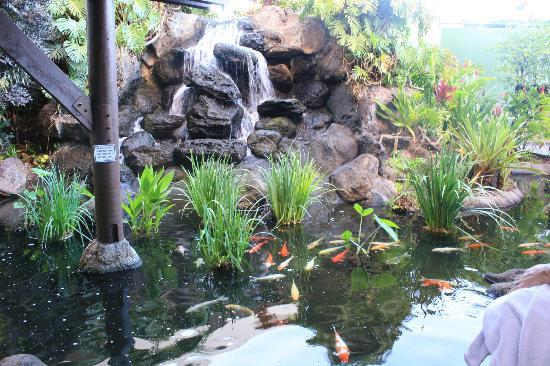 Ka'anapali Beach Club: Koi fountains
