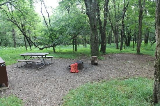 Big Meadows Campground: Site 50