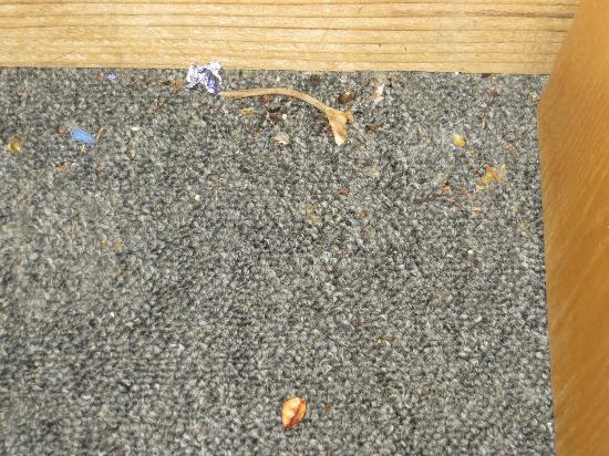 Sea Oats Motel: cherry pit/chicken bone/dirt on floor