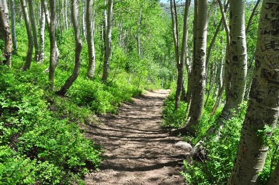 Big Cottonwood Canyon: Trail to Twin Lake