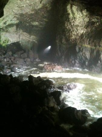 Sea Lion Caves: Taken with my cell phone.