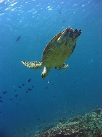 Eco-Divers