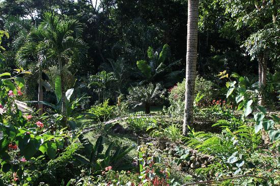 Villas Pico Bonito: Gardens