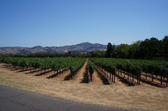 Green Hills Wine Tours: Napa Valley