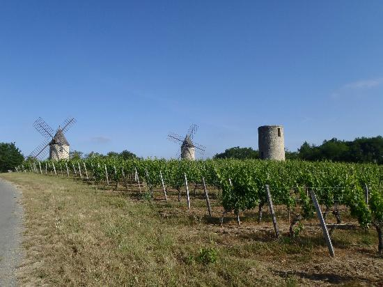 Chateau St Jacques Calon: Windmills in the vineyards