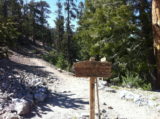Borderline, Upper/Lower Bristlecone Trails, Lee Canyon