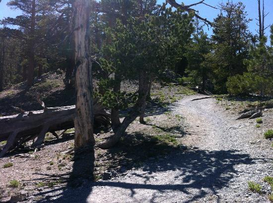 Part of Upper Bristlecone Trail, Lee Canyon