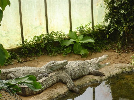 Thrigby Hall Wildlife Gardens: The Alligators